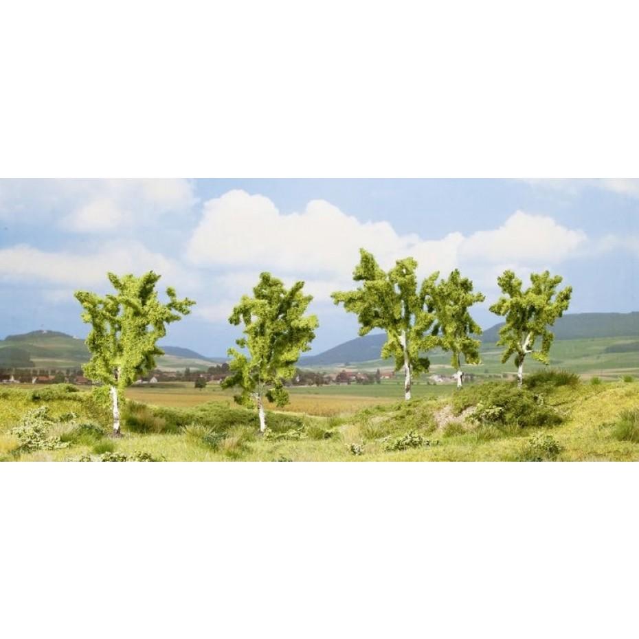 NOCH - 25004 - Classic birk 8 to 10cm  5 trees