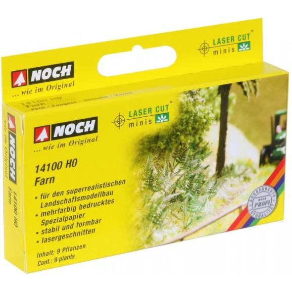 NOCH - 14100 - Fern 9 plants H0